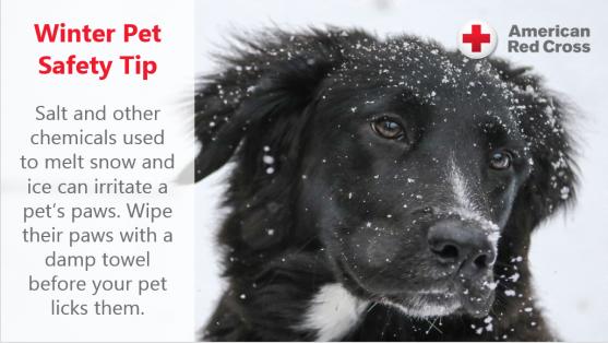 wintertip-petsafety1-wipe-paws